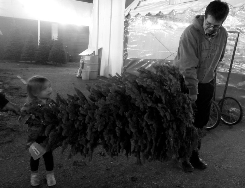 Tim, the tree lot owner, wanted us to stage this picture so that it looked like Alice was helping David carry the tree. Convinced?
